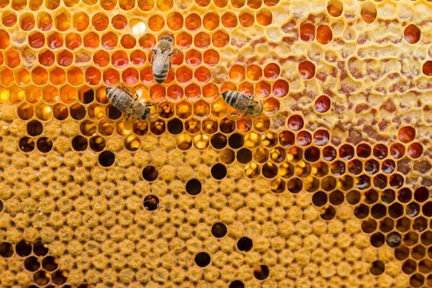 Vue De Dessus En Nid D'abeille Photo gratuit