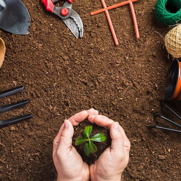Vue de dessus des outils de jardinage et de la plantation de jardinier Photo gratuit