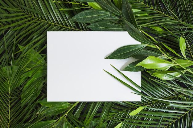 Vue de dessus d'une page blanche blanche sur des feuilles vertes Photo gratuit