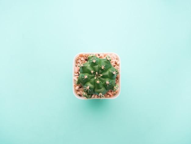 Vue de dessus petit cactus vert. Photo Premium