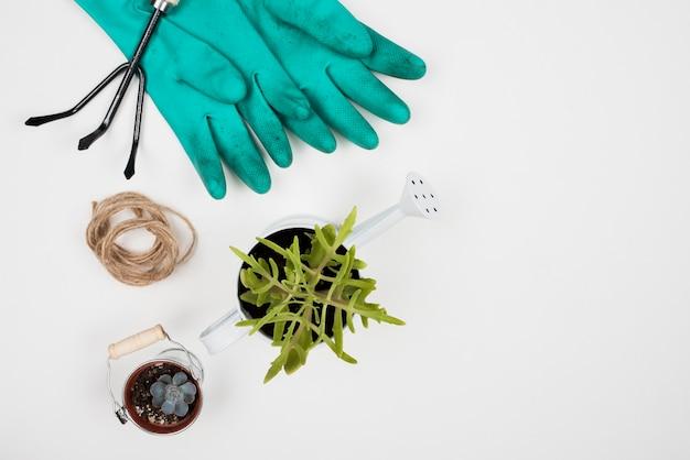 Vue de dessus de la plante dans un arrosoir et des gants Photo gratuit