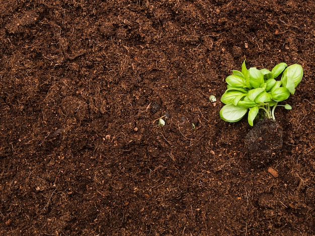 Vue de dessus de la plante sur le sol Photo gratuit