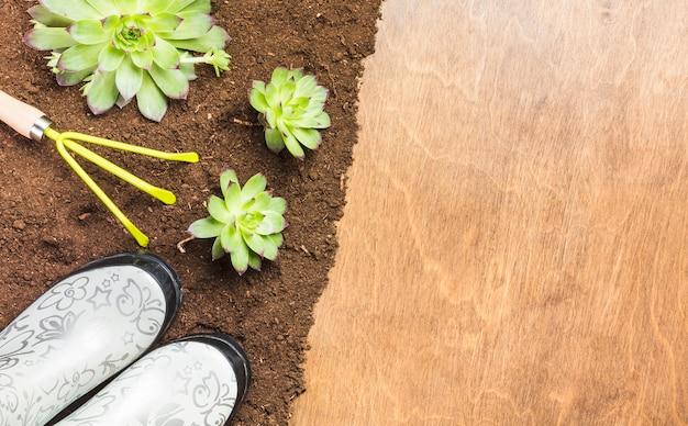 Vue de dessus des plantes sur le sol Photo gratuit