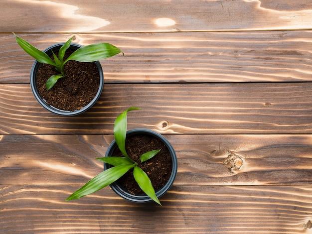 Vue de dessus des plantes sur une table en bois Photo gratuit