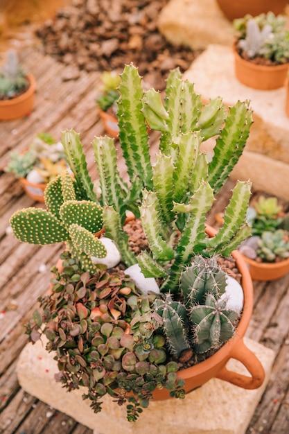 Vue de dessus d'un pot avec une variété de plante succulente Photo gratuit