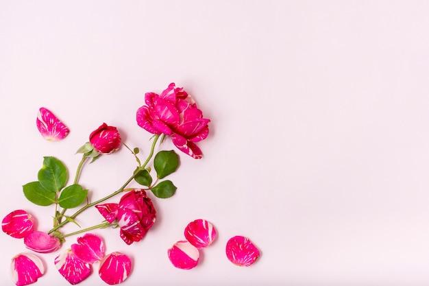 Vue De Dessus Rose Rouge Avec Concept De Pétales Photo gratuit