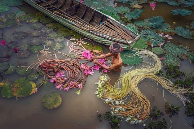 Vue de dessus vieil homme vietnamien ramassant le beau lotus rose dans le lac au vietnam Photo Premium