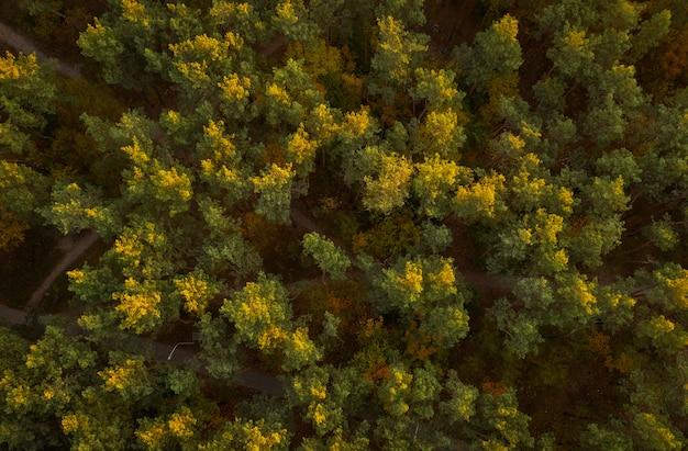Vue De Drone Aérien De Forêt D'automne. Fond D'automne Coloré Photo Premium
