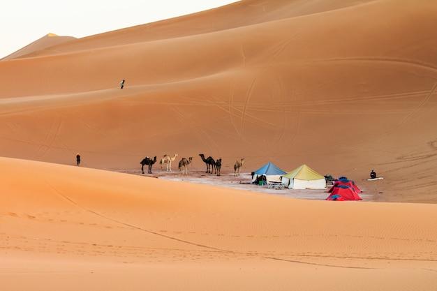 Vue du camp dans le désert du sahara Photo Premium