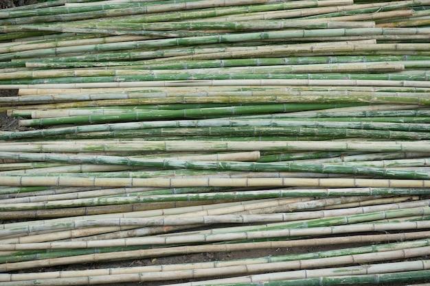 Vue du rang de bambou vert et brun comme toile de fond Photo Premium