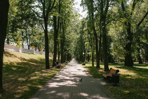 Vue du sentier dans le parc Photo Premium
