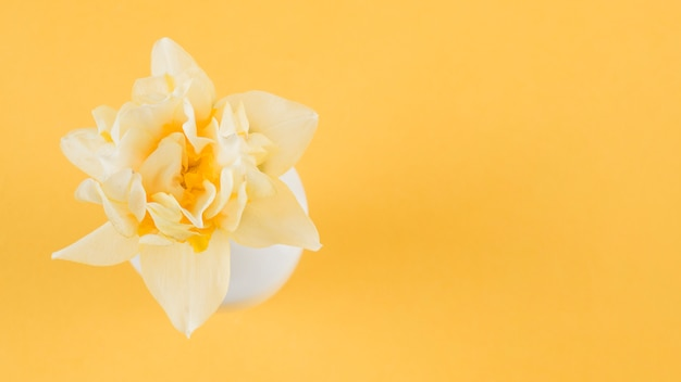 Une vue en élévation de belle fleur sur fond jaune Photo gratuit