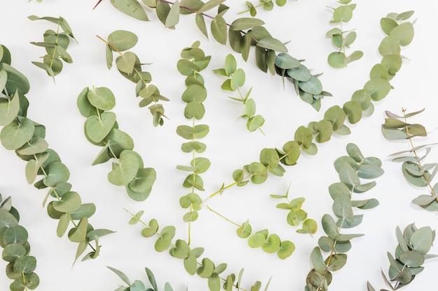 Vue élevée de brindilles vertes réparties sur fond blanc Photo gratuit