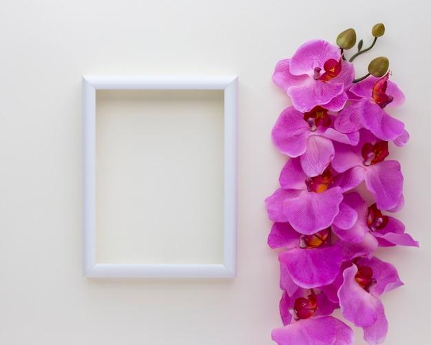 Vue élevée du cadre photo vide avec des fleurs d'orchidées roses au-dessus de fond blanc Photo gratuit