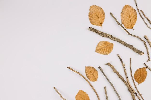 Une vue élevée de feuilles sèches et de brindilles isolés sur fond blanc avec espace de copie pour le texte Photo gratuit