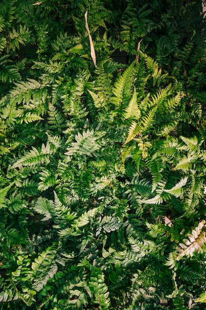 Une vue élevée de fougère feuilles fond Photo gratuit
