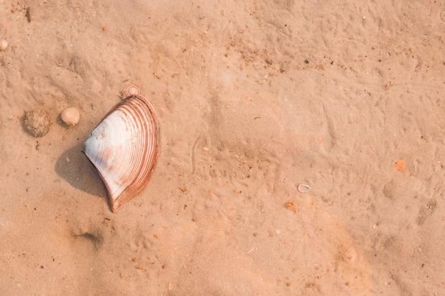 Une vue élevée de pétoncles sur le sable Photo gratuit