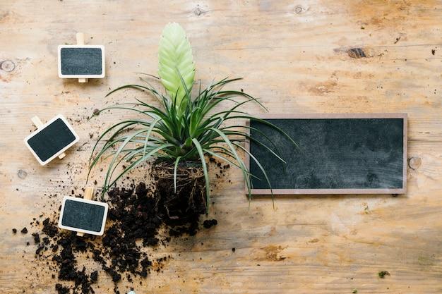 Vue élevée, de, plante verte, à, pieu vide, et, ardoise, sur, planche bois Photo gratuit