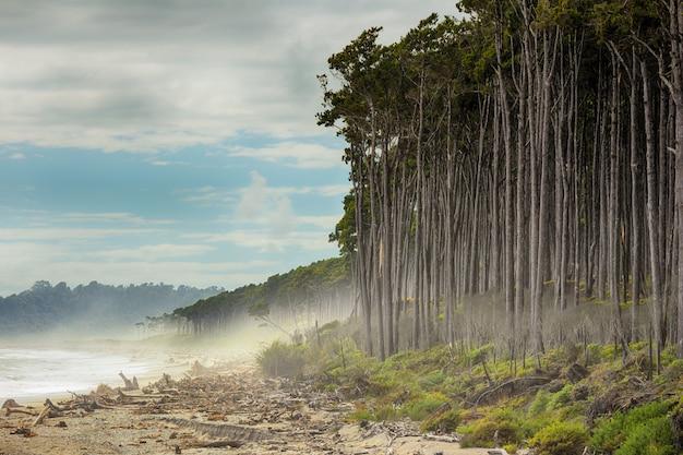 Vue estivale de bruce bay, plage de pins rouges bordant la plage, île du sud, nouvelle-zélande Photo Premium