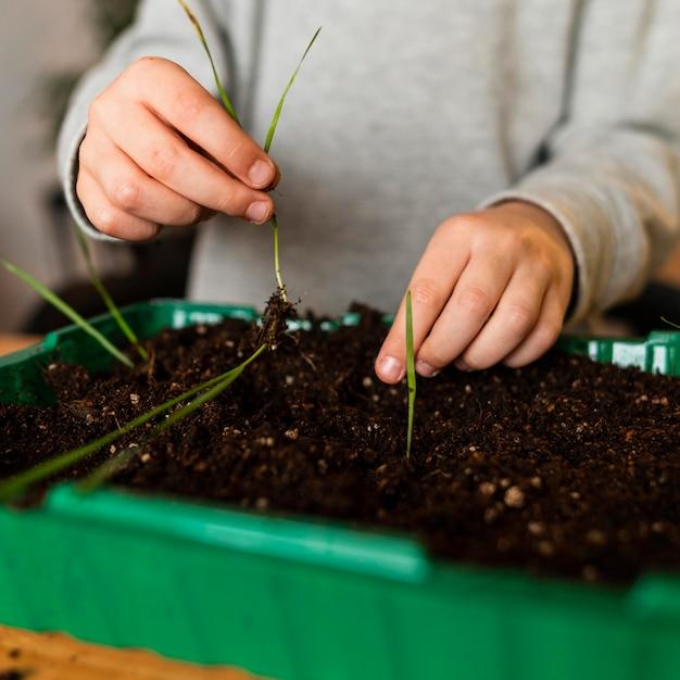 Vue De Face Du Petit Garçon Plantant Des Pousses à La Maison Photo gratuit
