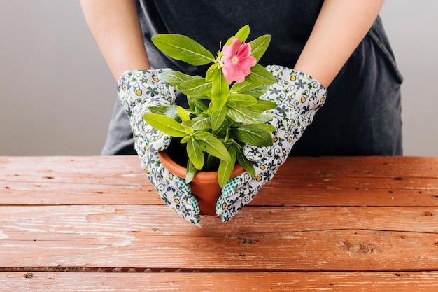 Vue de face d'une personne tenant un pot de fleurs Photo gratuit