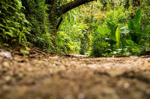 Vue de la forêt tropicale verte pendant la saison des pluies Photo gratuit