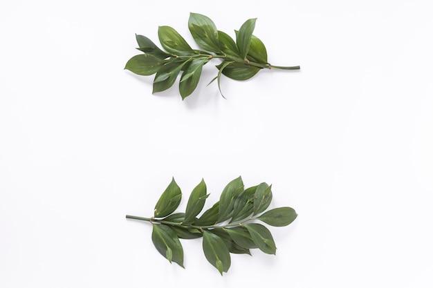 Vue grand angle de feuilles vertes fraîches sur fond blanc Photo gratuit