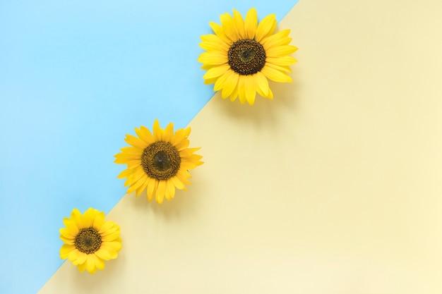 Vue grand angle de tournesols sur double fond coloré Photo gratuit