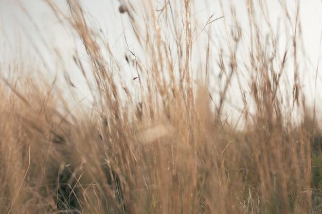 Vue de hautes herbes Photo gratuit