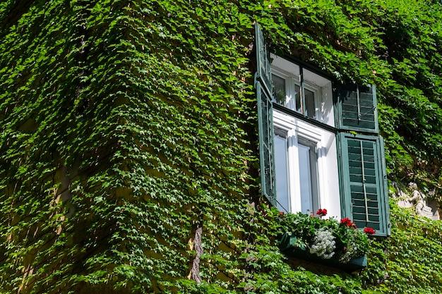 Vue de la maison qui est recouverte de raisins sauvages. Photo Premium