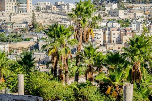 Vue de maisons arabes à jérusalem-est à travers les palmiers du centre davidson Photo Premium