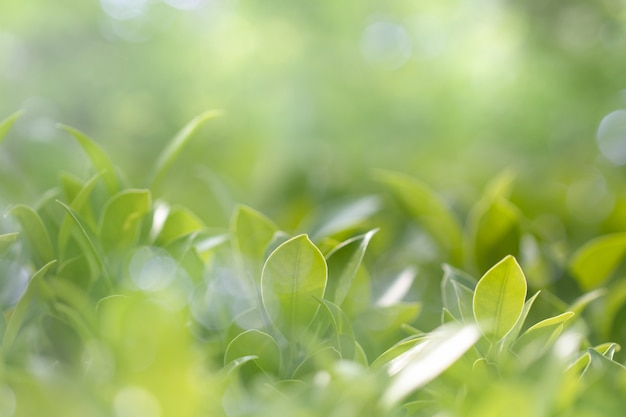 Vue de la nature de la feuille verte dans le jardin en été sous le soleil Photo Premium