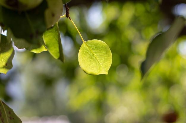Vue de la nature de la feuille verte sur fond de verdure floue dans le jardin avec espace de copie comme arrière-plan Photo Premium