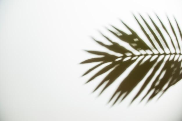 Une vue d'ombre noire sur fond blanc Photo gratuit