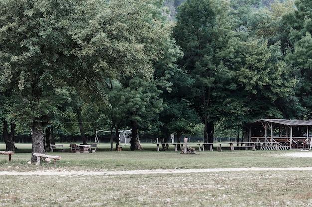 Vue panoramique sur les arbres dans le parc Photo gratuit