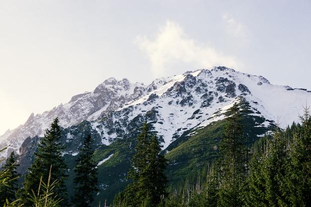 Vue Panoramique Du Paysage D'été Dans Les Montagnes Des Alpes Photo Premium