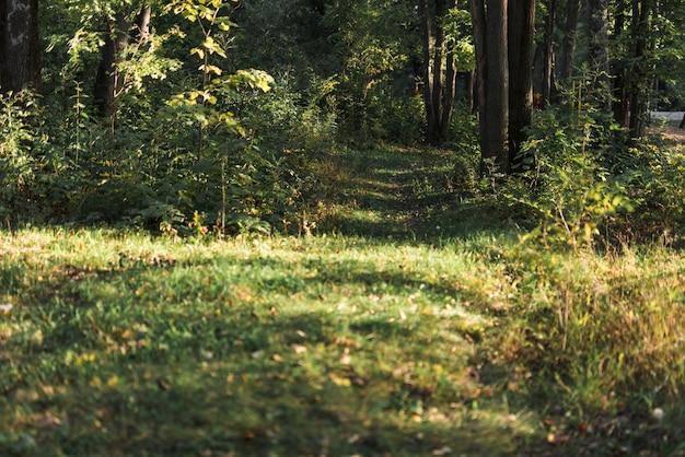 Vue panoramique de la forêt tropicale verte Photo gratuit