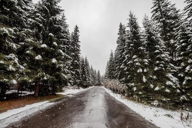 Vue panoramique sur la route avec la neige et la montagne et fond d'arbres géants en saison d'hiver. morske oko Photo Premium