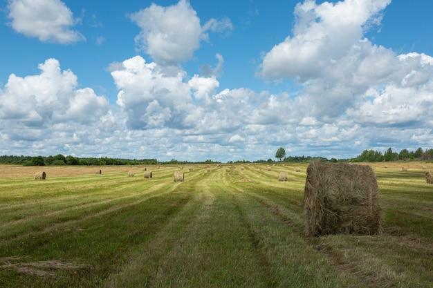 Vue Panoramique Sur Le Terrain Avec Des Meules De Foin. Image Horizontale. Photo Premium