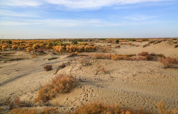 Vue paysage sec Photo gratuit
