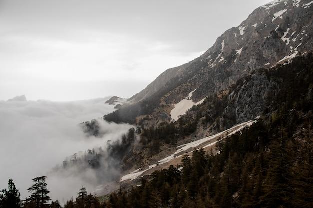Vue des pentes de la montagne avec une forêt Photo Premium