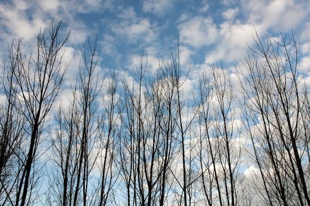 Vue De Quelques Branches D'arbres Sans Feuilles En Automne. Photo Premium