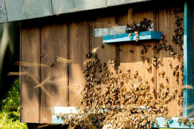 Une Vue Rapprochée Des Abeilles De Travail Apportant Du Pollen De Fleurs à La Ruche Sur Ses Pattes. Photo Premium