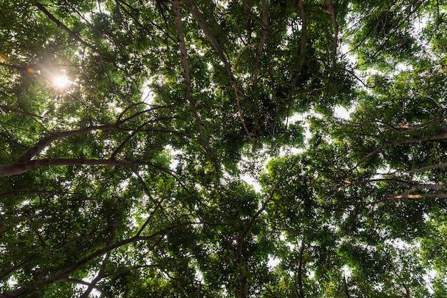 Vue rapprochée du vieil et grand arbre, du bas à la cime des arbres Photo Premium