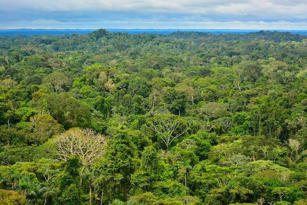 Vue de la région amazonienne Photo Premium