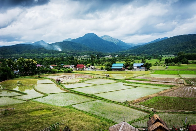 Vue des rizières et des montagnes et de la cabane à wat phuket Photo Premium
