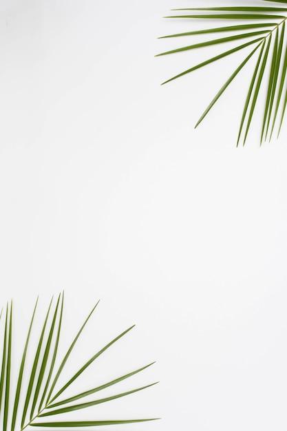 Vue surélevée des feuilles de palmier au coin de la toile de fond blanche Photo gratuit