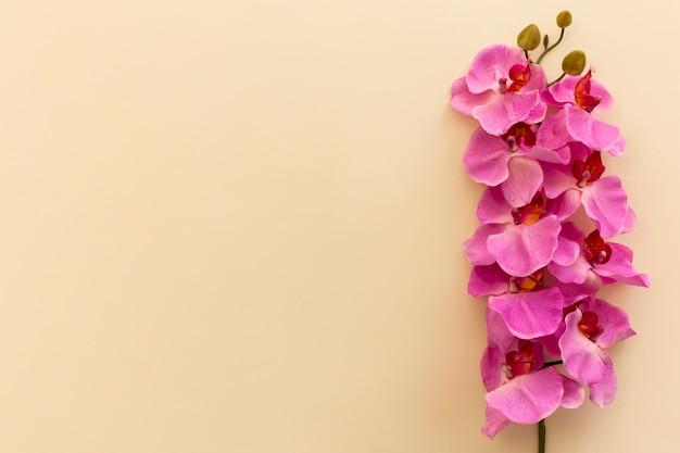 Vue surélevée de fleurs d'orchidées roses sur fond beige Photo gratuit