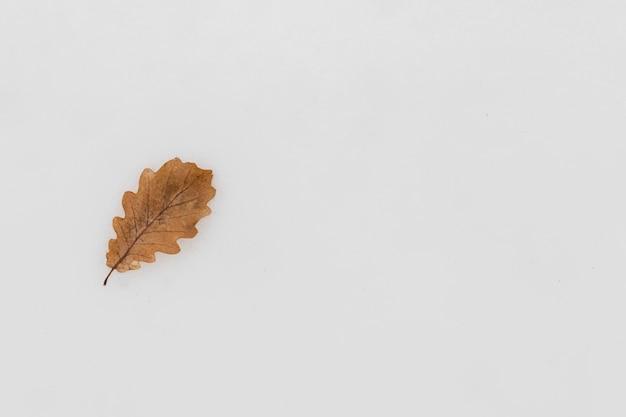 Vue Surélevée D'une Seule Feuille D'automne Sur Fond Neigeux Photo Premium