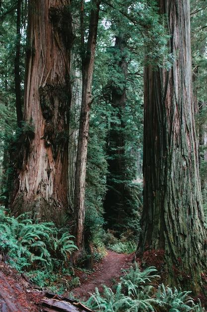 Vue Verticale D'un Sentier Entouré De Verdure Dans Une Forêt Pendant La Journée - Cool Pour Les Arrière-plans Photo gratuit